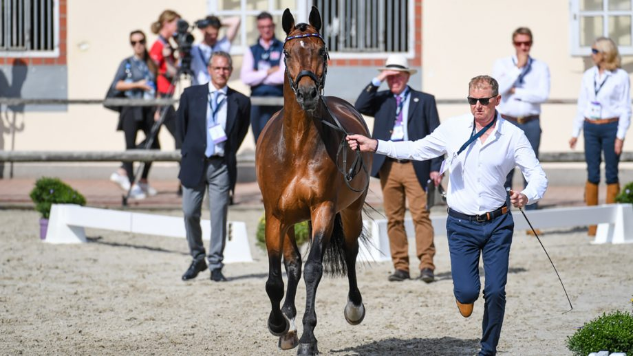 European Dressage Championships grand prix times: Gareth Hughes and Sintano Van Hof Olympia wil compete on Tuesday