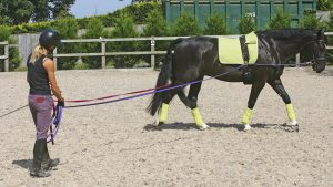 Long reining can be a useful way of exercising horses with arthritis, also known as Degenerative Joint Disease (DJD)