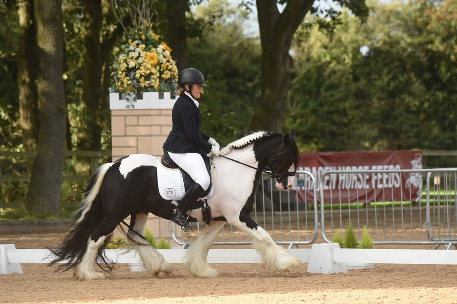 Brickell Mr Pickwick at the National Dressage Championships