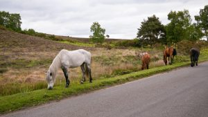 New Forest roads