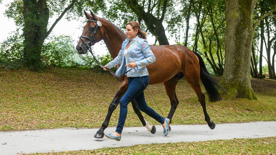 Bicton Horse Trials first trot-up: Piggy March and Vanir Kamira