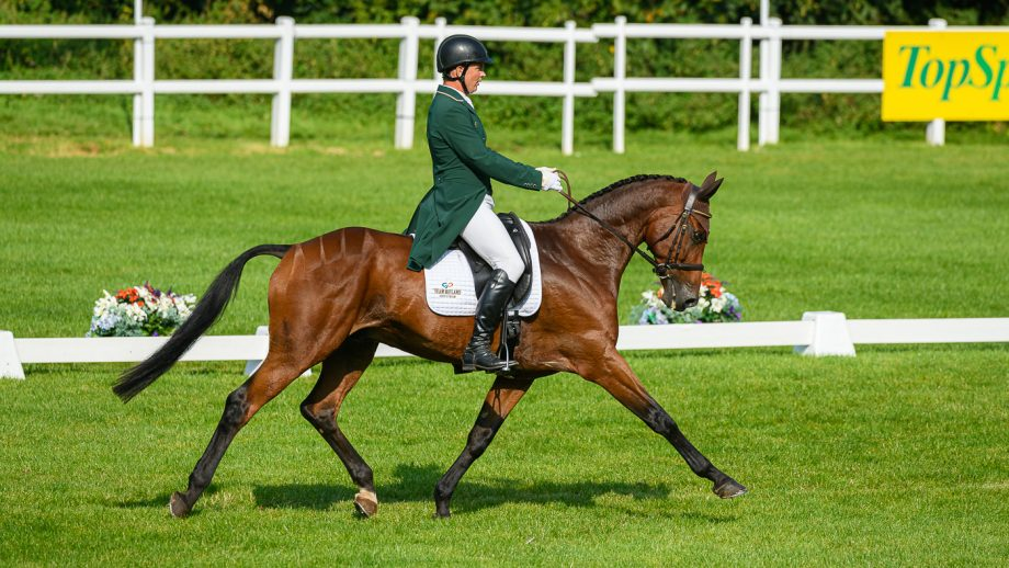 Bicton Horse Trials withdrawals: Padraig McCarthy and Leonidas II, who was withdrawn before cross-country