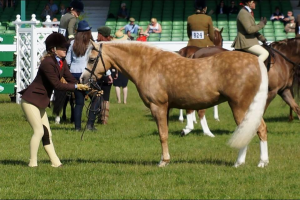Milford Fair Breeze and Rowen Hilton are off to HOYS
