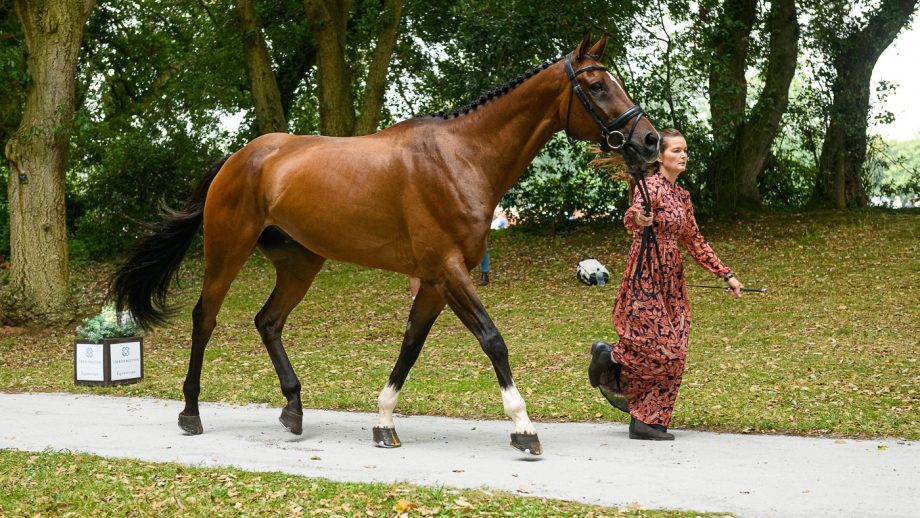 Bicton Horse Trials first trot-up: Malin Josefsson and Golden Midnight