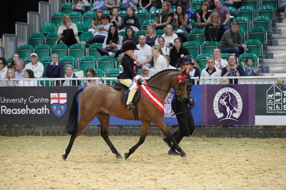 Mini pony champions at HOYS 2021 are Anya Dewey Clarke and Barkway Take That