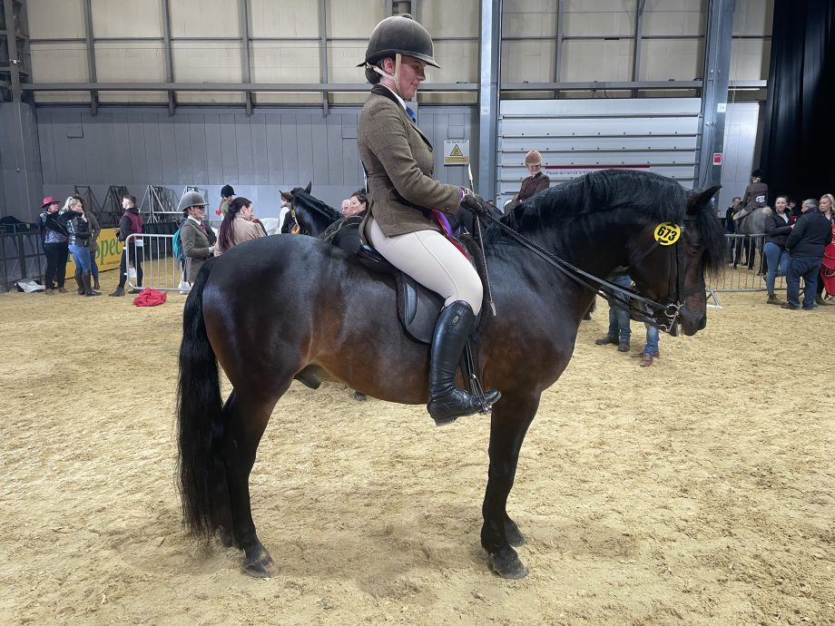 Ellena Thomas and Hilltop Ned win the New Forest final of the year at the 2021 Horse of the Year Show