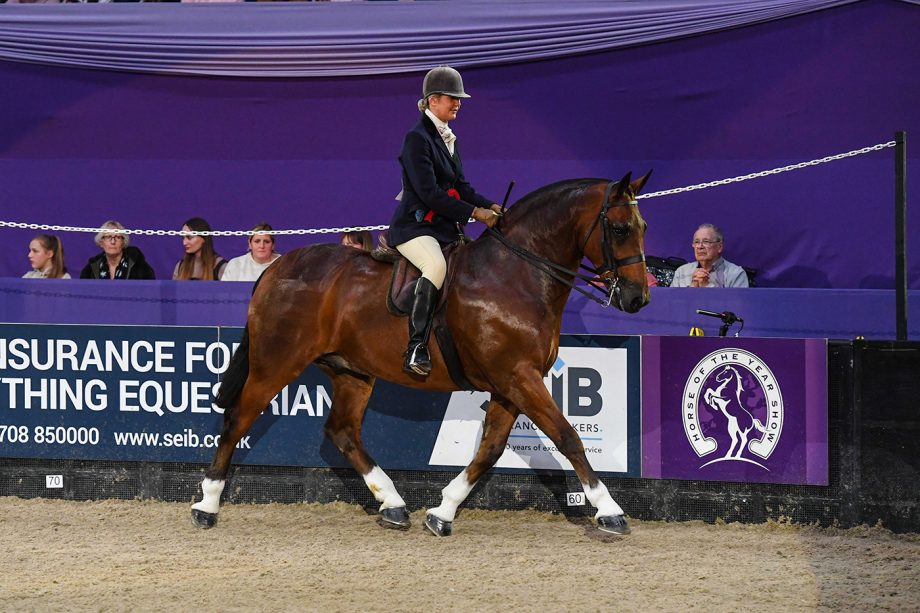 Red Butler and Sarah Walker are cob of the year winners at HOYS 2021