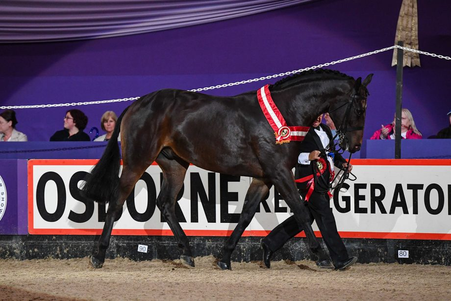 Tell Me Another is the Price Family in-hand champion at HOYS 2021