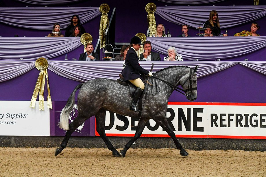 Lucy Hopkins and Chilly Breeze are 2021 SEIB SFAS champions at HOYS