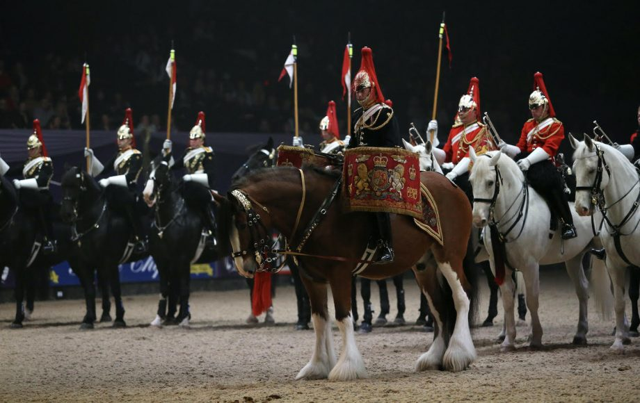 Household Cavalry drum horse Perseus at HOYS
