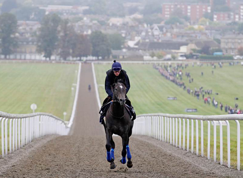 Newmarket Open Day