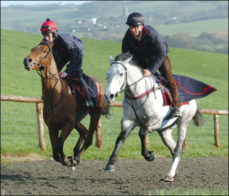 Andrew Nicholson enjoys working Detroit City on the gallops