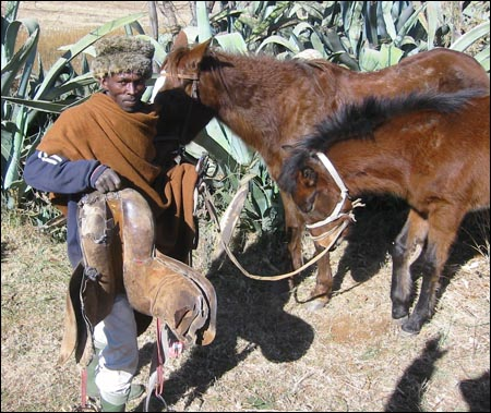 There is a real need for training in saddlery, farriery, and nutrition in Lesotho according to the ILPH