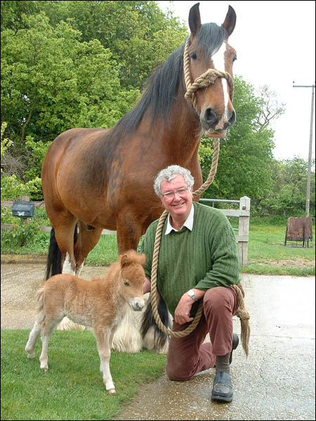 Norfolk Shire Horse Centre Welcomes New Arrival Horse