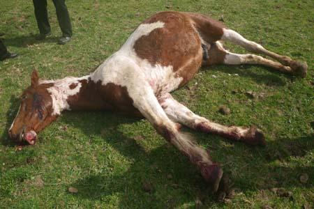 Horse found dead with gunshot wound to head - Horse & Hound