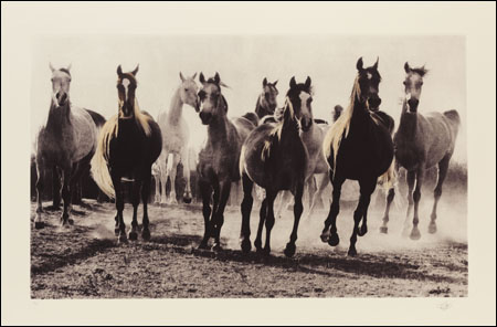 An image from The Spirit of Equus exhibition