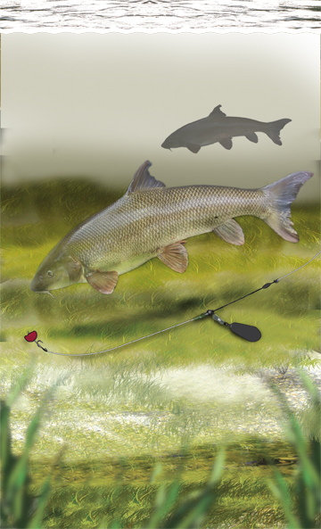 Barbel fishing rig that 39 s simple for you to make for yourself for Fish on main