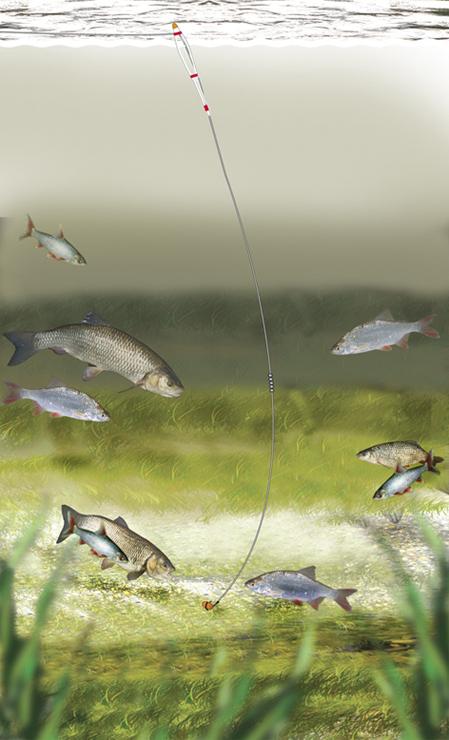 Fantastic Chub & Roach Float Fishing Rig