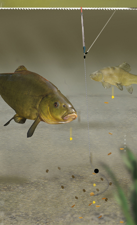 Learn to catch catfish community