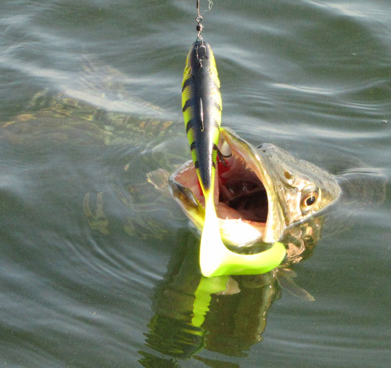 Pike fishing tips to boost your catches in spring and summer for The best fishing lures