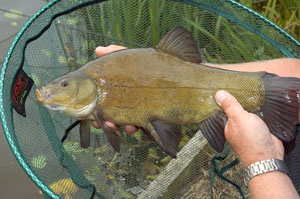 ... here?s another one. This time we show you how to catch tricky tench