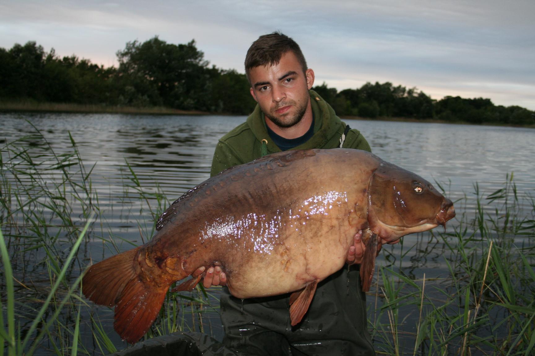 Near 50 lb carp from Essex Manor