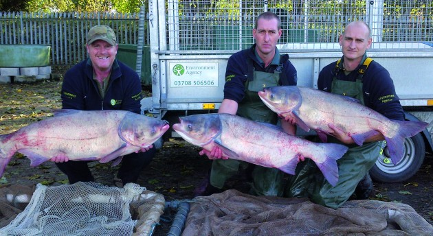 UK silver carp and big head carp destroyed