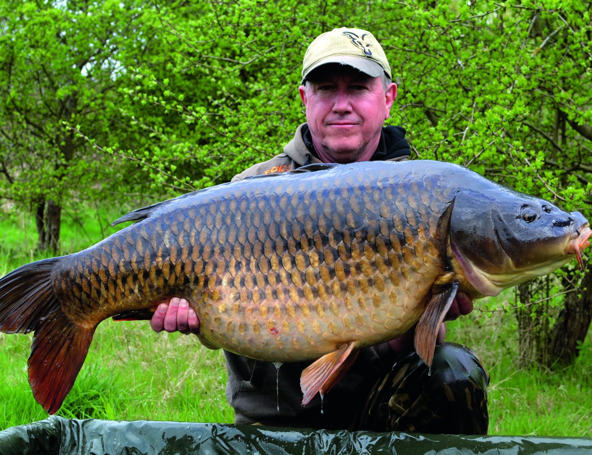 Monster brace of common carp