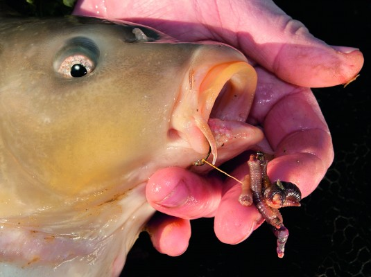 Best 5 winter carp baits for Best bait to catch fish