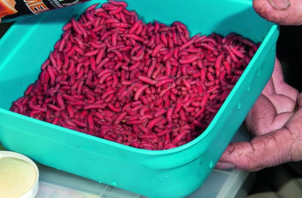 how to get maggots to use for fishing
