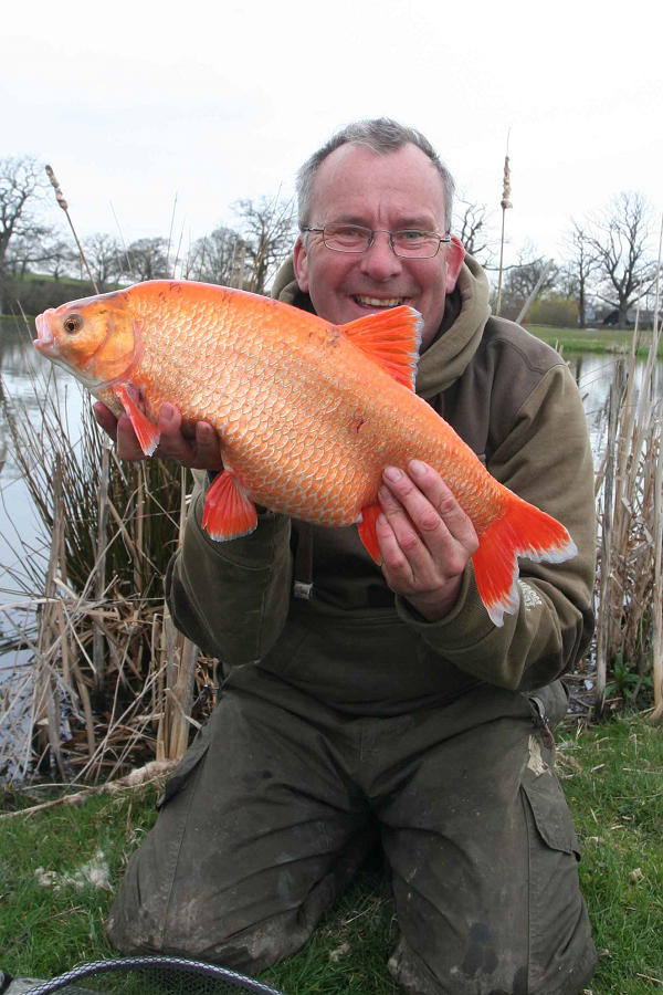 ... new, something orange - on the hunt for golden orfe - Anglers Mail