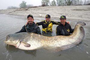 The huge Wild Catz wels catfish.