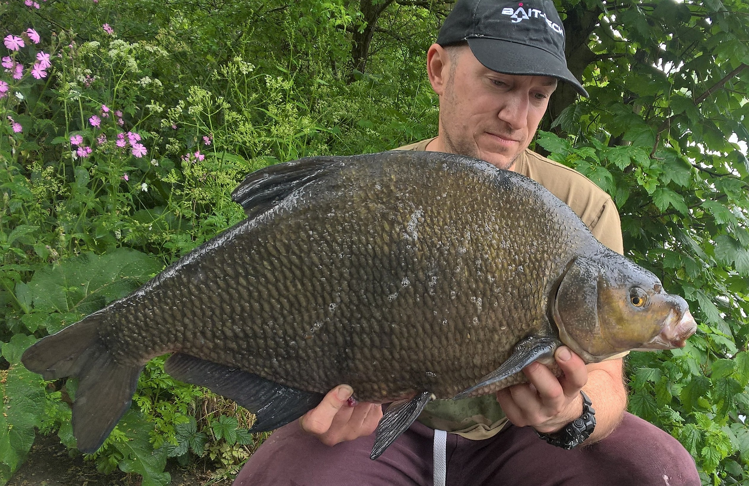 The biggest of Phil Morton's epic haul of big bream and carp.