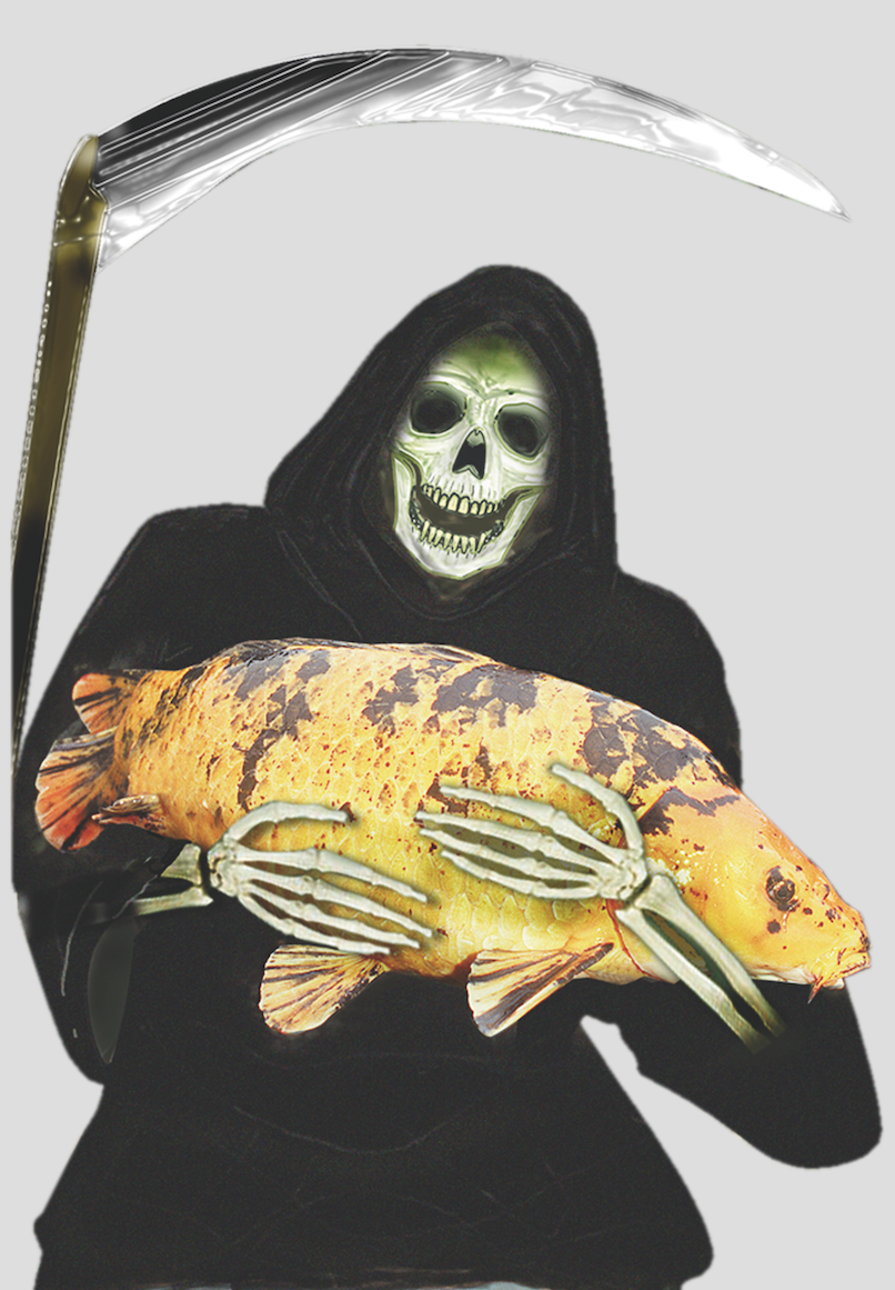 The grim reaper ... koi herpes virus.