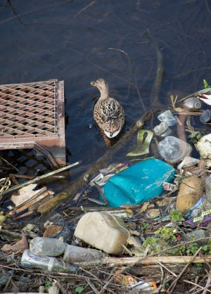 Wildlife effects of the plastic crisis in waters around the UK has been wrongly blamed, almost entirely, upon anglers.