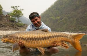 Gary Newman displays his 62 lb redfin mahseer.