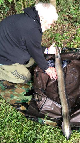 Kim Whiley admires the giant eel, that scaled 8 lb 2 oz.