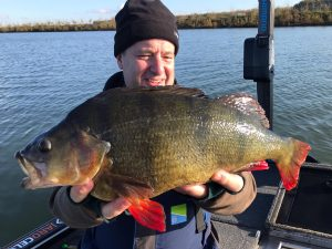 Holland perch fishing stunner - this super stripy scaled 6 lb 3 oz.