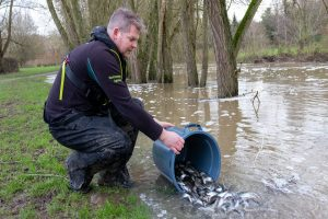 Great Ouse fishing prospects are improving after more fish were stocked.