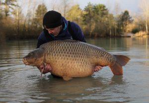 What a winter common - James Jones prepares to return his 88 lb 4 oz Gigantica carp.