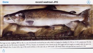 This fish is the sea trout record - but was it really a true sea trout?