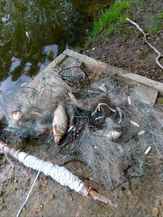 Some of the dead fish found at a club lake during the coronavirus crisis.