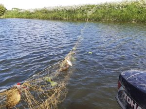 This net was strung across the River Nene.