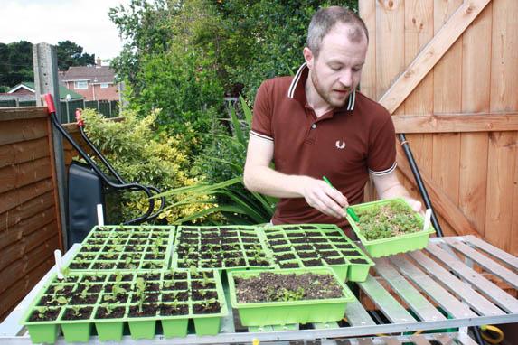 pricking out seedlings