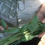 Remove the lower leaves from each cut flower stem