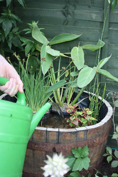 Container water gardening amateur gardening water container topping up water levels workwithnaturefo