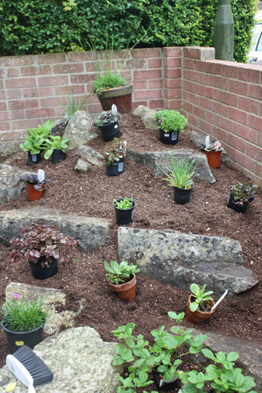 Create an alpine rockery amateur gardening for Garden rockery designs