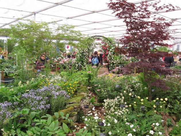 RHS Chelsea will have competition in 2012