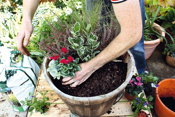 How to plant large winter containers amateur gardening for Garden pods to live in
