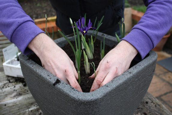 Get instant colour from bulbs this Spring - Amateur Gardening